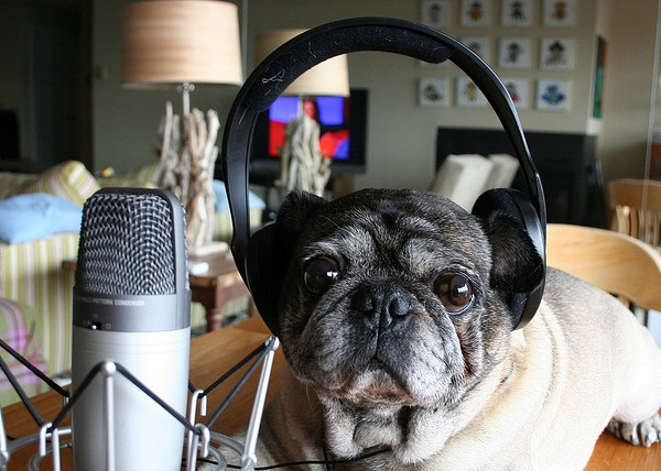 podcasting dog reduced